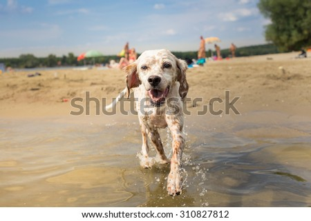 Happy dog enjoy time in water #310827812