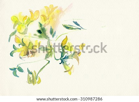 Yellow wildflowers isolated on white  watercolor paper. Watercolor illustration. #310987286