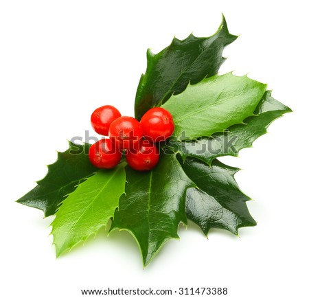 Holly berry leaves Christmas decoration isolated on white background Royalty-Free Stock Photo #311473388