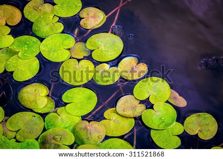 driftweeds leafs on water surface - abstract natural background #311521868