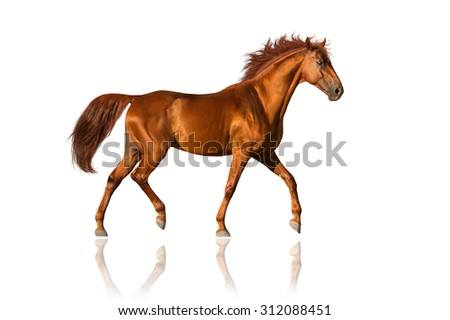 Red horse trotting isolated on white