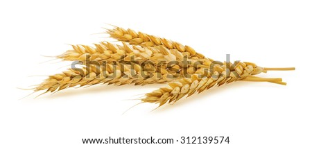 Horizontal wheat ears isolated on white background as package design element #312139574
