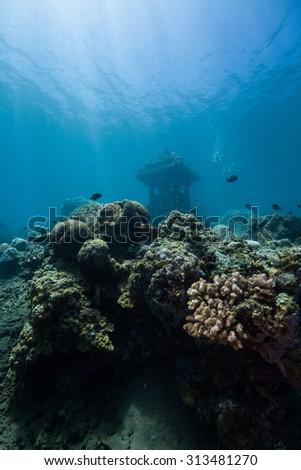Coral reef #313481270