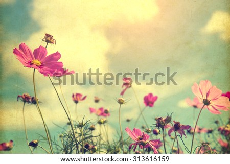 cosmos flower - paper art texture, nature background - vintage filter effect #313616159