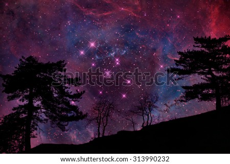 Alien planet with tree silhouette again sky with many stars - elements of this image are furnished by NASA #313990232