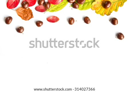 Colorful autumnal leaves and nuts on white background with copy space #314027366