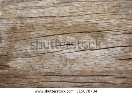 Wood texture of cut tree #315078704