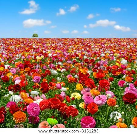 flowers field #3151283