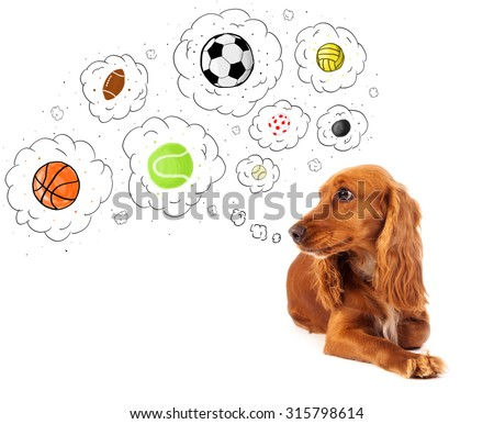 Cute cocker spaniel thinking about balls in thought bubbles above her head #315798614