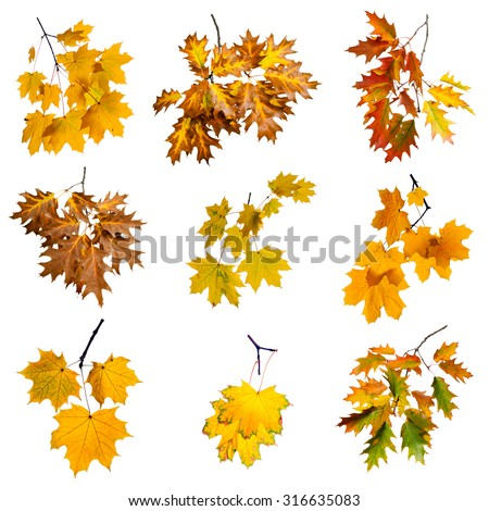 Set of colorful autumn branch isolated on white background. #316635083