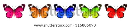 Butterflies of a various colors on a white background #316805093