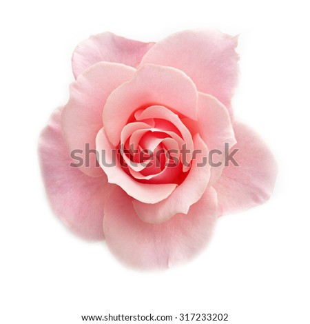 sweet flower on white isolated #317233202