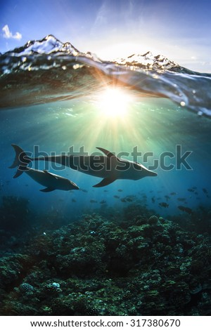 Two dolphins underwater a family mother with her child and breaking splashing wave above in sunlight #317380670