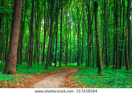 beautiful green forest #317658584