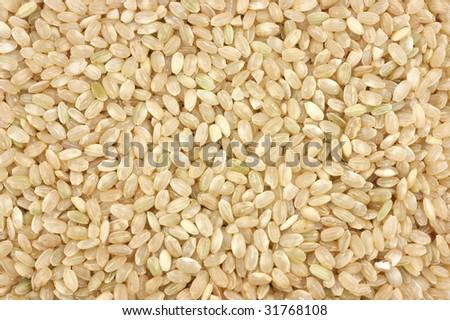 Organic short brown rice #31768108