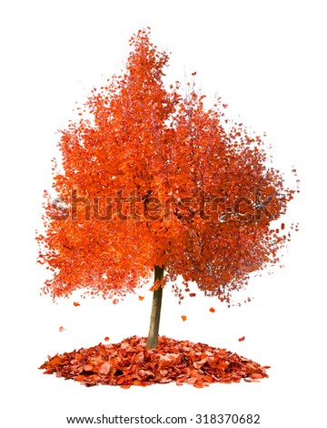 Photo of tree with red leaves falling down isolated on white #318370682