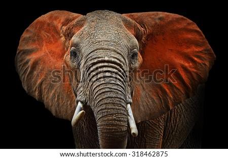 Beautiful African elephants in Tsavo Park in Kenya #318462875