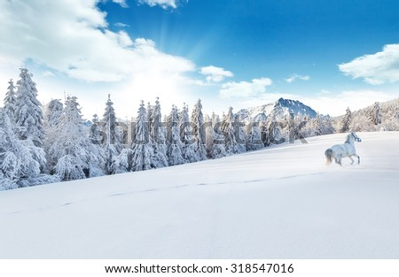 White horse running in winter landscape with forest #318547016