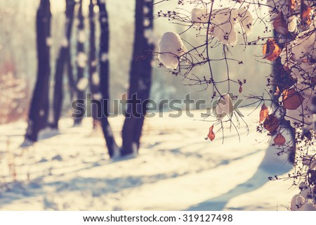 Winter forest. Instagram filter. Royalty-Free Stock Photo #319127498