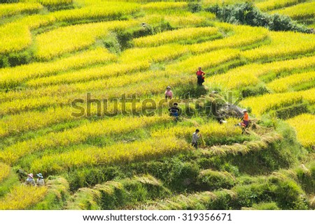 Yty Vietnam September 11 2015 Vietnam Paddy fields, terraced culture in Yty Laocai Vietnam.Yty is an attractive destination for tourists with the wild beauty in north Vietnam #319356671