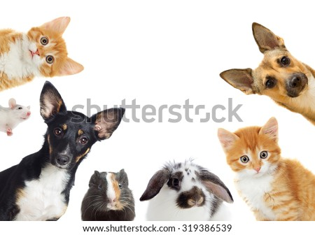 set of pet looking Royalty-Free Stock Photo #319386539