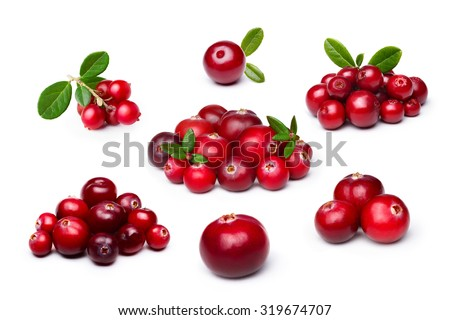 Wild northern berries: lingonberry (foxberry,cowberry),cranberry #319674707