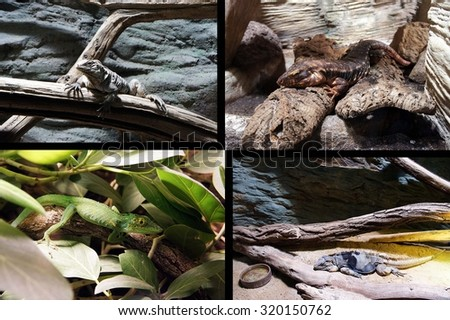 Dragons - collage of photos of various lizards #320150762