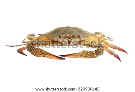 Green crab isolated on white background #320930645