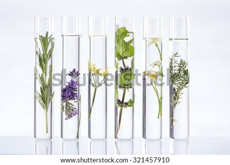 Scientific Experiment - Flowers and plants in test tubes Royalty-Free Stock Photo #321457910