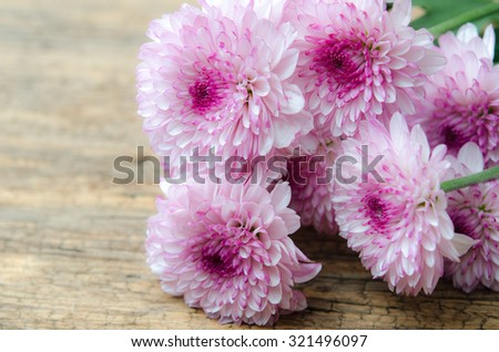 pink chrysanthemums on wooden #321496097