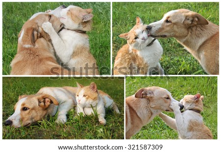 Set of photos about friendship ginger cat and dog