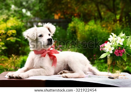 fluffy white puppy with vase of jasmin and carnation flowers on the summer garden  background