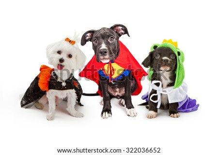 Three cute little puppy dogs dressed up in Halloween costumes including a witch, super hero and frog prince Royalty-Free Stock Photo #322036652