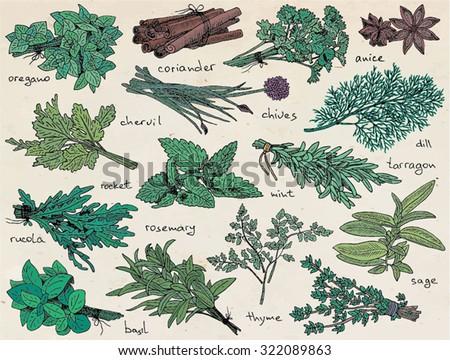 herbs, anice,basil, chervil, chives, cilantro, cinnamon, coriander, dill, mint, oregano, parsley, rosemary, rucola, rocket, sage, tarragon, thyme on the vintage background #322089863