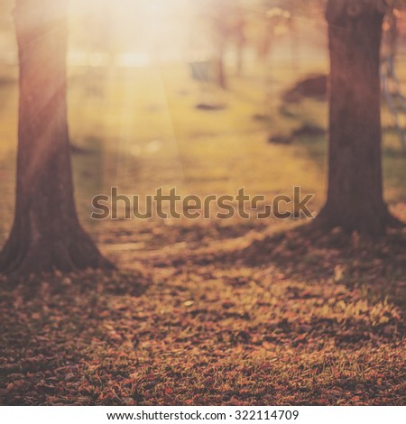 Picturesque autumn park background. Bright yellow and red trees fall background with a bright shining sun.   #322114709