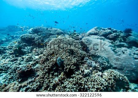 under the sea #322122596