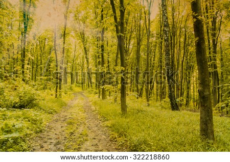 Nature background of green forest #322218860