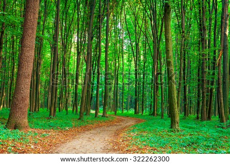 beautiful green forest #322262300