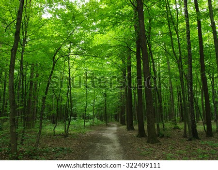Path in the green forest #322409111