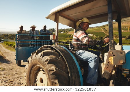 African man driving a tractor with harvested grapes. Vineyard worker taking grapes to wine manufacturer. Delivering grapes from farm to wine factory for making wine. #322581839