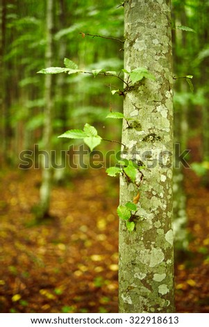 Young hornbeam forest in a sunny day with selective focus #322918613