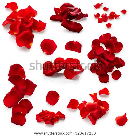 Set of red rose petals isolated on white background #323617253