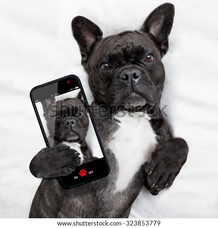 dog  , taking a selfie in bed to share it with friends