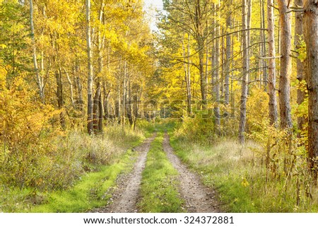 Autumn forest road #324372881
