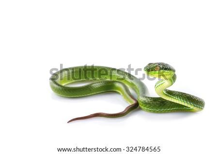 Green snake #324784565