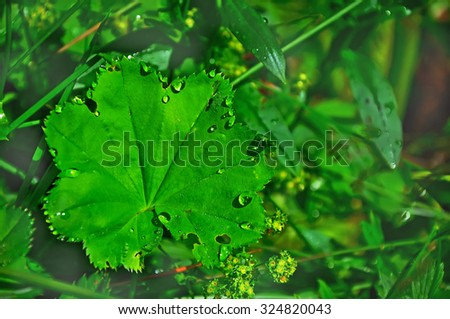 Green leaf with water drops, macro, nature eco background, Ukraine #324820043