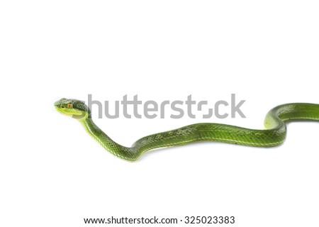 Green snake #325023383
