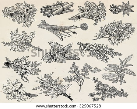 herbs, anice,basil, chervil, chives, cilantro, cinnamone, coriander, dill, mint, oregano, parsley, rosemary, rucola, rocket, sage, tarragon, thyme on the vintage background #325067528