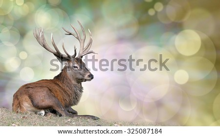 Majestic Stag enjoying a peaceful rest -  mature stag seated on grass on left with light behind head on a bokeh background and plenty of copy space on right hand side #325087184
