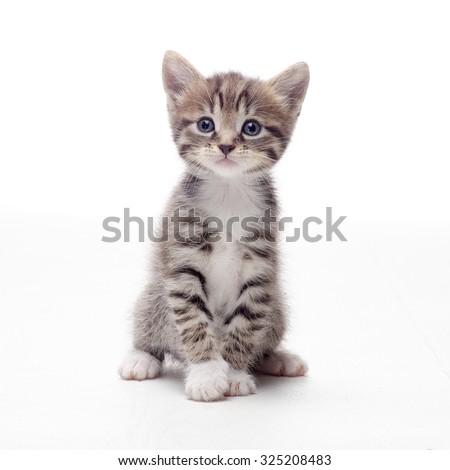 tabby kitten sitting on white background #325208483